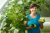 Woman picking cucumber — Stock fotografie