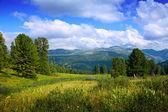 Krajobraz z leśnej góry — Zdjęcie stockowe