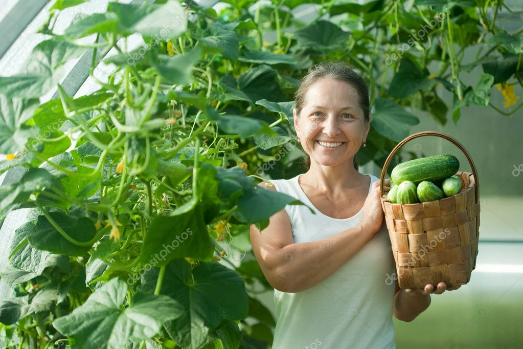 Happy woman with harvested cucumbers in the hothouse — Stock Photo #6813985