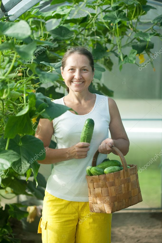 Smiling woman picking cucumbers in  hothouse — Stock Photo #6813986