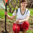 Woman planting fruit tree — Stock Photo
