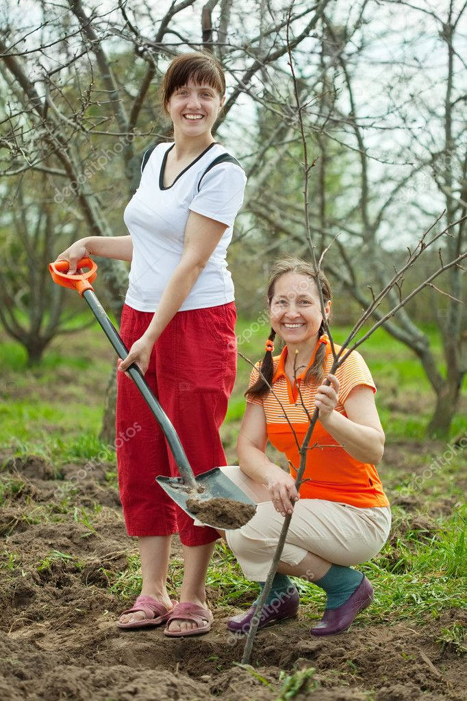Two female gardeners planting tree outdoor in spring — Stock Photo #6854872