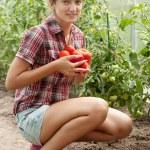 Smiling girl picking tomato — Stock Photo #6875053
