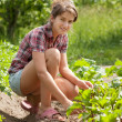 Teenager girl working in field — Stock Photo