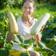 Stock Photo: Wompicking vegetable marrow