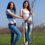 Two gardeners planting tree — Stock Photo #6875767