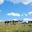 Saddled horses in mountains - Stok fotoğraf