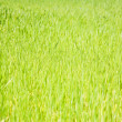 Green grass — Foto de stock #6879021