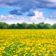 Stock Photo: Landscape with dandelions
