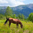 Horse on  hillside — Stock Photo