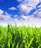 Green meadow under cloudy sky — Stock Photo
