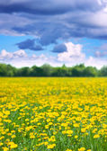 Landscape with dandelions — Stock Photo