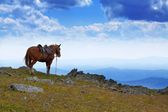 Saddled horse in mountains — Stock Photo