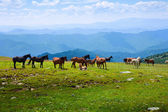 Landscape with herd of horses — Stock Photo