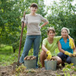 Stock Photo: Women harvested potatoes