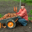 Woman with harvested carrots — Stock Photo #7599117