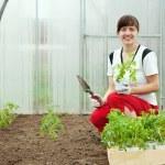 Woman planting tomato seedling — Stock Photo #7599420