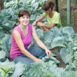 Royalty-Free Stock Photo: Girls  in plant of cabbage