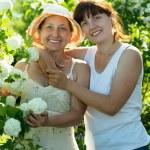 Women in Roseum plan — Stock Photo