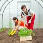 Women planting tomato seedlings — Stock Photo
