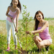Woman with teen daughter setting tree i — Stock Photo