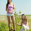 Woman with teen daughter  resetting  tree — Stock Photo