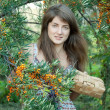 Woman picking seabuckthorn — Stock Photo