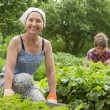 Women working in vegetable garden — Stock Photo #7613308
