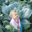 Stock Photo: Baby in cabbage plant