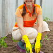 Woman planting tomato - Stock Photo