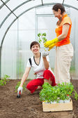 Women planting spouts in greenhouse — Stock Photo