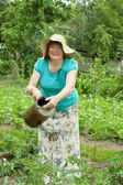 Woman watering tomato plan — Stock Photo