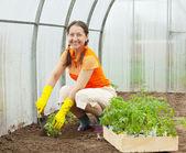 Mature woman planting tomato — Stock Photo