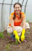 Woman planting tomato — Stock Photo