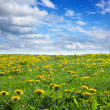Summer landscape with dandelion meadow — Stok fotoğraf