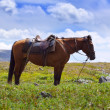 Saddled horse -  