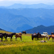 Herd of horses in mountains — Stock Photo #7632722