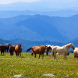 Mountains landscape with  horses -  