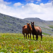 Horses on  meadow -  