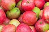 Lots of red ripe apple — Stock Photo