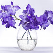 Vanda coerulea Lindl — Stock Photo