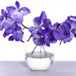 Vanda coerulea Lindl - Stock Photo