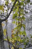 Hop leaves — Стоковое фото