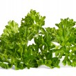 Parsley — Stock Photo #7198599