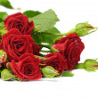 Roses isolated on white — Stock Photo
