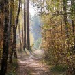 Autumn forest — Stock Photo #7212395