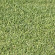 Green grass field — Stock Photo #6906023