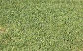 Campo de grama verde — Fotografia Stock