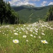 Summer landscape in Carpathians, Ukraine — Stock Photo