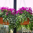 Hanging flowers on a street — Stock Photo #7009113